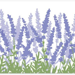 "All Occasion Theme Gift Cards - Lavender Field Theme Gift Cards 3 -3/4x2 -3/4"" (30 Packs; 6 Cards Per Pack)"